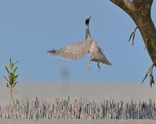 Những bức ảnh về chim đẹp nhất thế giới