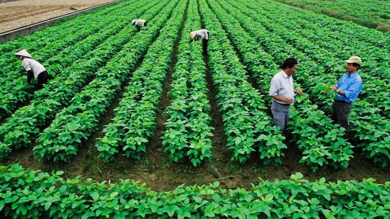 6 tiêu chí đánh giá hợp tác xã nông nghiệp