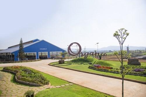 SCIC bán tiếp 3,33% vốn Nhà nước tại Vinamilk