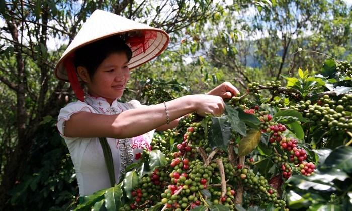 Gia tăng giá trị cho sản phẩm cà phê