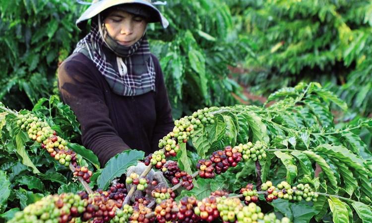 Sàn giao dịch hàng hóa Việt Nam: Không thể rập khuôn mô hình nước ngoài