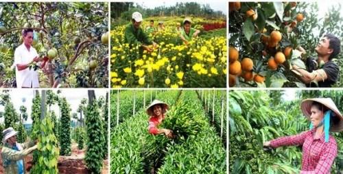 Quản lý và sử dụng kinh phí sự nghiệp thực hiện Chương trình nông thôn mới