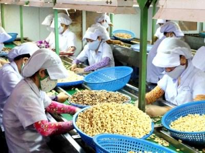 Bộ Tài chính hướng dẫn chính sách thuế đối với hàng nông sản trồng tại Campuchia