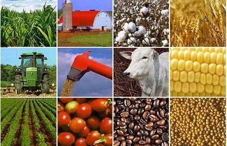 Triển vọng các thị trường hàng hóa năm 2013