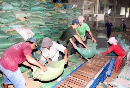 Đẩy mạnh tạm trữ để tiêu thụ hết lúa gạo cho nông dân