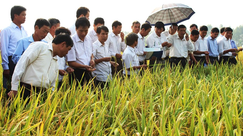 IPO gần 2 triệu cổ phần của Giống cây trồng Hải Dương