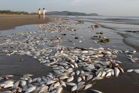 BIDV công bố gói tín dụng 1.500 tỷ đồng cho các tỉnh có cá chết hàng loạt