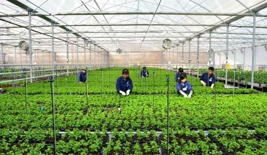 Gói tín dụng 100.000 tỷ đồng cho nông nghiệp công nghệ cao có lãi suất phù hợp
