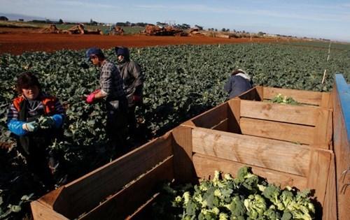 """Tình trạng """"ăn cắp tiền lương"""" của người lao động châu Á tại Australia"""