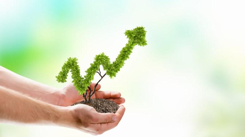 Vận hạn nhà đầu tư tuổi Dậu trong năm Mậu Tuất như thế nào?