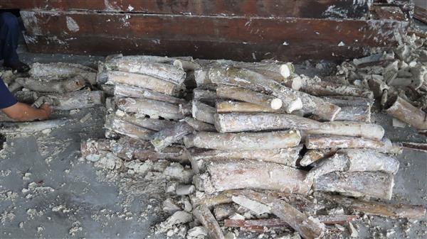 Tạm đình chỉ điều tra 4 vụ buôn lậu ngà voi