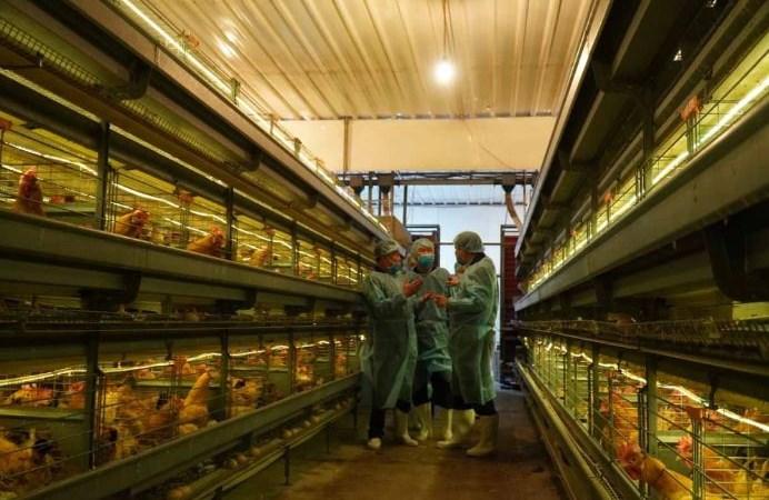 Ngành nông nghiệp chuyển sang thể chủ động trước dịch bệnh Covid-19