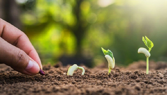 Thất bại không phải dấu chấm hết: Mỗi hạt giống bạn gieo, đều có thể đơm thành quả ngọt