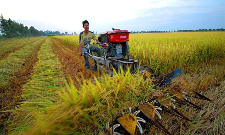 Một số giải pháp thúc đẩy chuyển dịch cơ cấu ngành kinh tế vùng Đồng bằng Sông Cửu Long