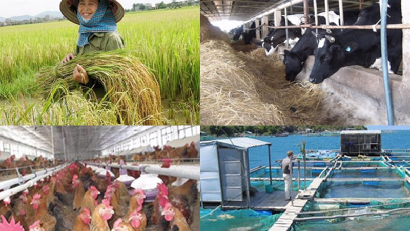 Chính sách hỗ trợ bảo hiểm nông nghiệp phù hợp với cân đối ngân sách từng thời kỳ