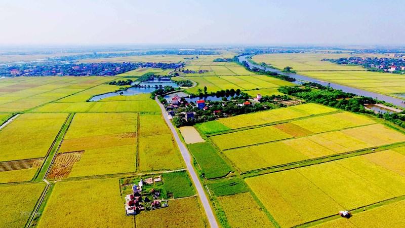 Kéo dài thực hiện hạng đất tính thuế sử dụng đất nông nghiệp đến hết năm 2025