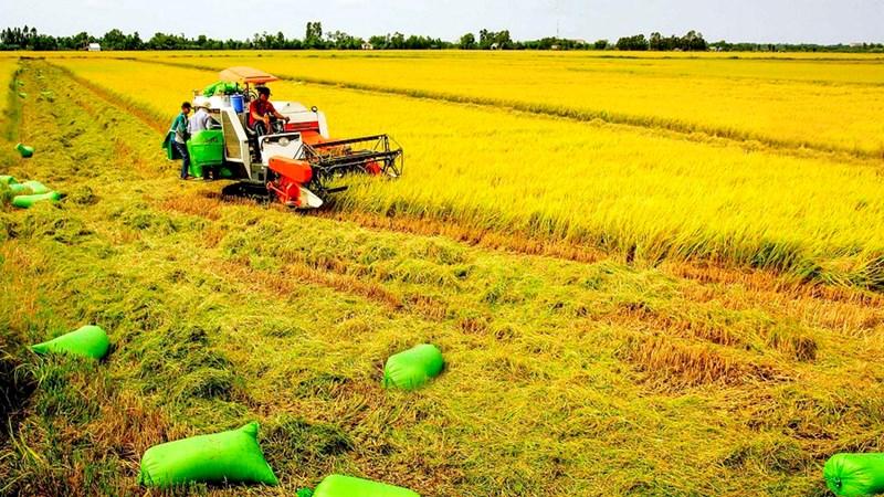 Giải pháp phát triển lúa gạo Việt Nam trước những biến đổi khí hậu