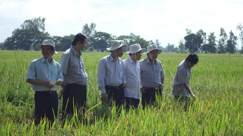 Giải pháp tái cơ cấu hiệu quả ngành nông nghiệp Việt Nam