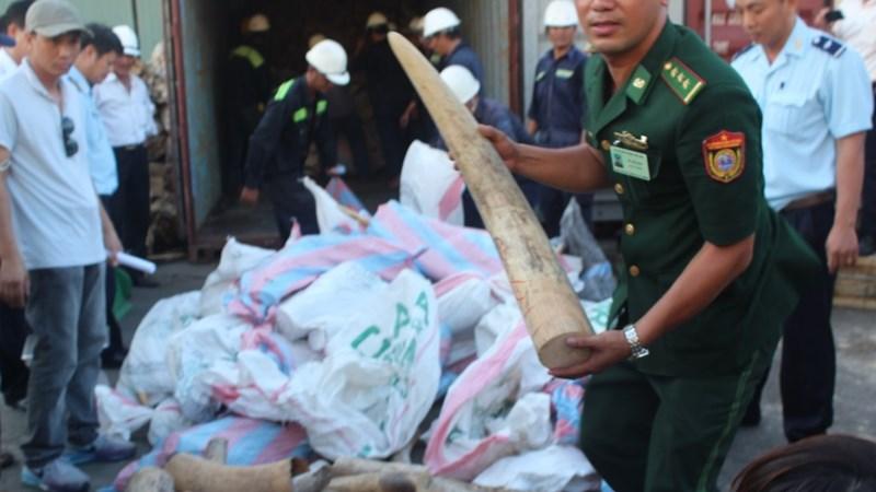 Khởi tố vụ buôn lậu gần 2,2 tấn ngà voi qua cảng Tiên Sa
