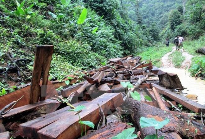 Làm rõ việc khai thác gỗ trái phép tại Kon Tum