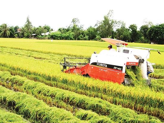 Thị trường sôi động nhờ gạo thơm