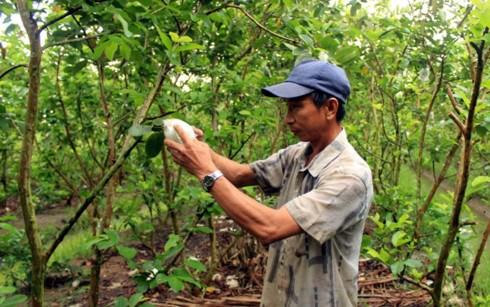 """Cần """"bốn nhà"""" chung tay thúc đẩy nông nghiệp ĐBSCL phát triển bền vững"""