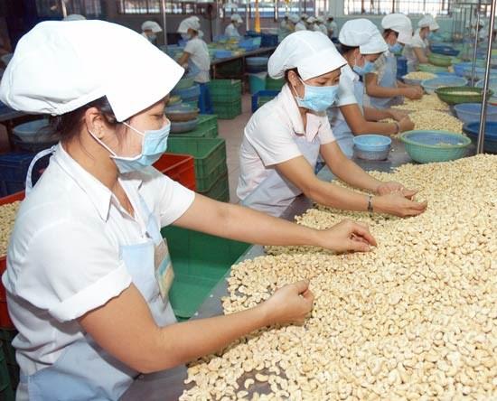 Xuất khẩu điều Việt Nam không còn lệ thuộc Trung Quốc