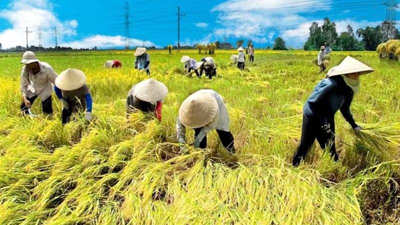 Phát triển bền vững ĐBSCL: Ưu tiên thủy sản, cây ăn trái, lúa