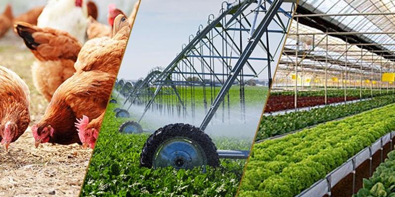 Liên kết sản xuất giữa nông dân và doanh nghiệp: Đa lợi ích