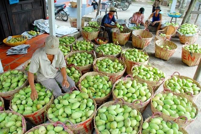Kết nối nhà nông với thị trường