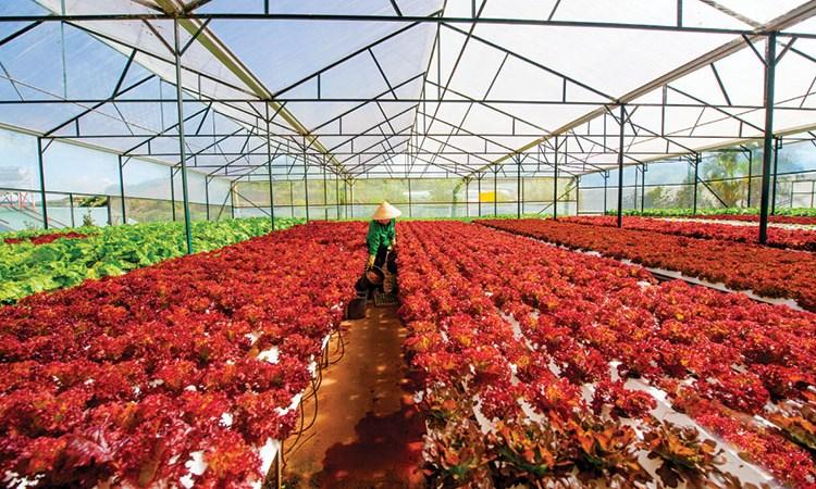 Nông sản Việt Nam hưởng lợi lớn từ Trung Quốc