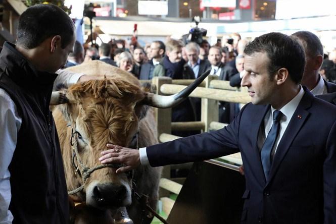 Dân phản ứng vì vụ tỷ phú Trung Quốc mua 2.700 hecta đất, Tổng thống Pháp hành động như thế nào?