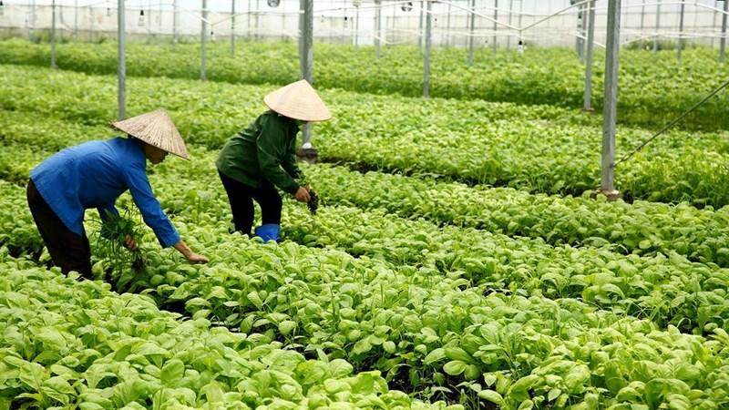Nhà đầu tư khó đổ vốn vào nông nghiệp