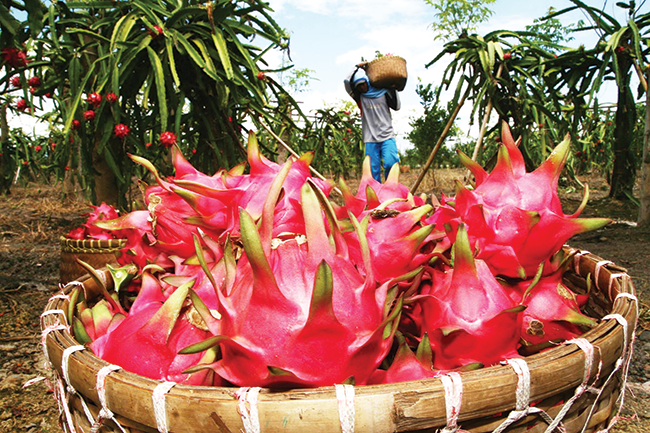 Trái cây Đông Nam Á lên ngôi