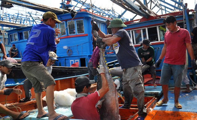 """Gỡ """"thẻ vàng"""" cho xuất khẩu thủy sản: Cần xây dựng nghề cá có trách nhiệm"""