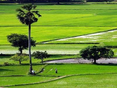 Công tác quản lý đất đai - những vấn đề đang đặt ra