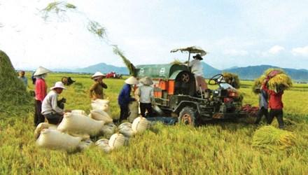 Củng cố trụ cột nông nghiệp, bảo đảm ổn định kinh tế trong giai đoạn khó khăn