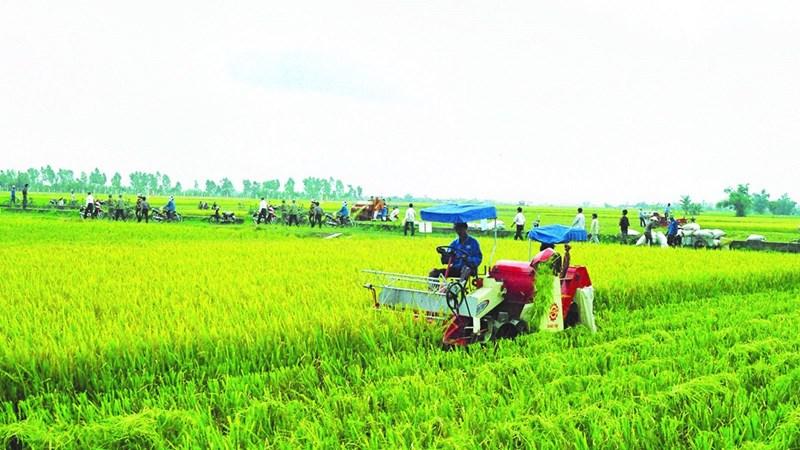 Còn nhiều dư địa phát triển bảo hiểm nông nghiệp