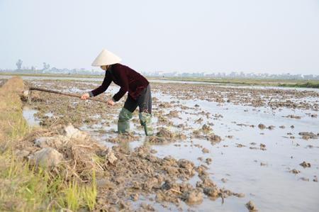 Phòng, chống hạn, đảm bảo cấp nước sản xuất nông nghiệp