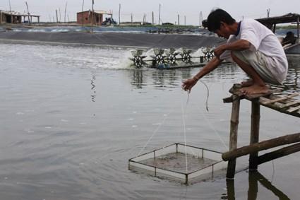 Hỗ trợ 90 tấn hóa chất cho 2 tỉnh phòng, chống dịch bệnh thủy sản