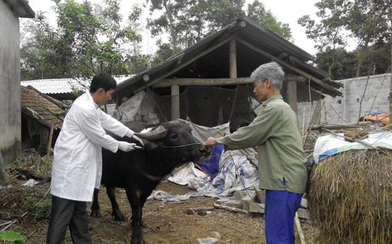 Khung giá mới về dịch vụ tiêm phòng, tiêu độc, khử trùng cho động vật