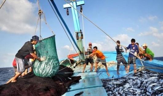 Quy định mới về mức phạt đối với hành vi vi phạm trong hoạt động thủy sản