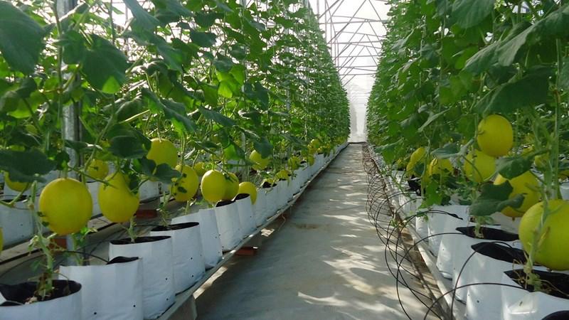 Phát triển nông nghiệp công nghệ cao: Từ nhà kính đến đồng ruộng