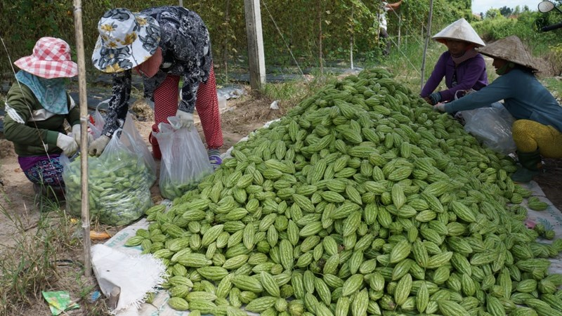 Khơi thông dòng vốn tín dụng vào khu vực nông nghiệp, nông thôn