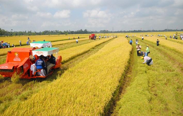 Từ 1/7 miễn thuế toàn bộ diện tích đất dùng cho sản xuất nông nghiệp