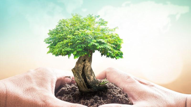 Chính sách thuế nhằm bảo vệ môi trường trong điều kiện hội nhập kinh tế quốc tế