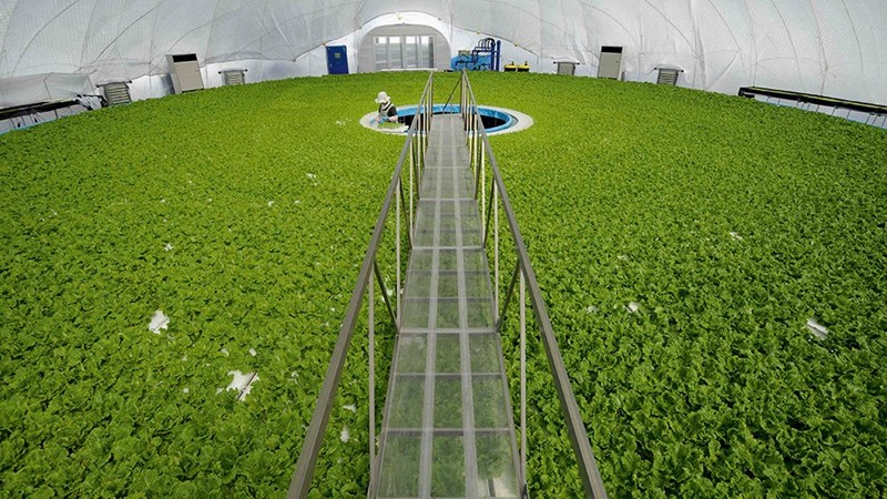 Nông nghiệp công nghệ cao: Tài sản lớn nhưng không được thế chấp