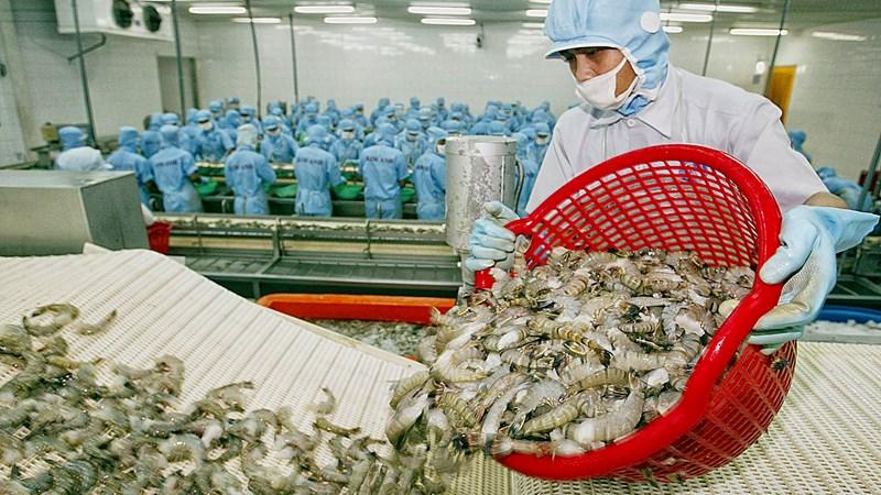 Đẩy mạnh xuất khẩu tôm sang thị trường Hàn Quốc