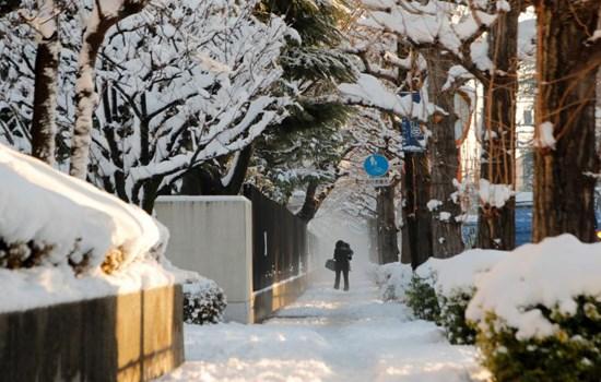Hình ảnh tuyết rơi kỷ lục tại Tokyo gây cản trở giao thông