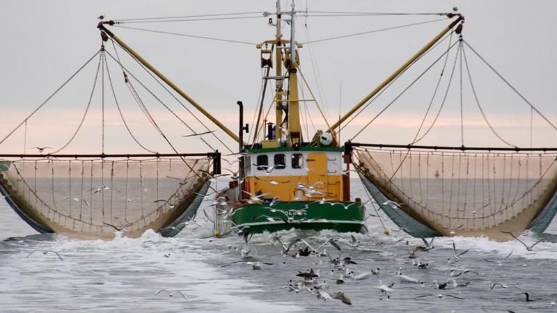 [Infographic] Tiết lộ quy mô đánh bắt cá